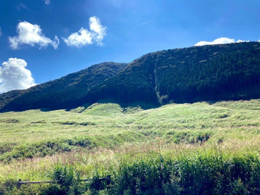 9月の箱根仙石原のすすき草原